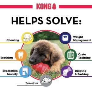 One of the best toys - The Kong for puppy dogs