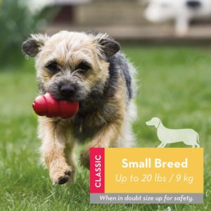1 of the best DOG toys - The Kong THE SMALL BREED