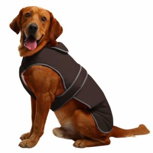 Our selection of the 2 best dog coats