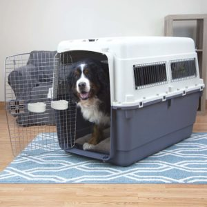 Neapolitan MastiffL Best travel crate IATA certified