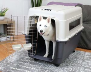 Best travel crate IATA certified for dogs
